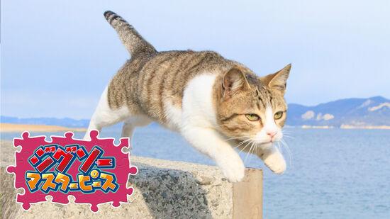 飛び猫 / 五十嵐健太