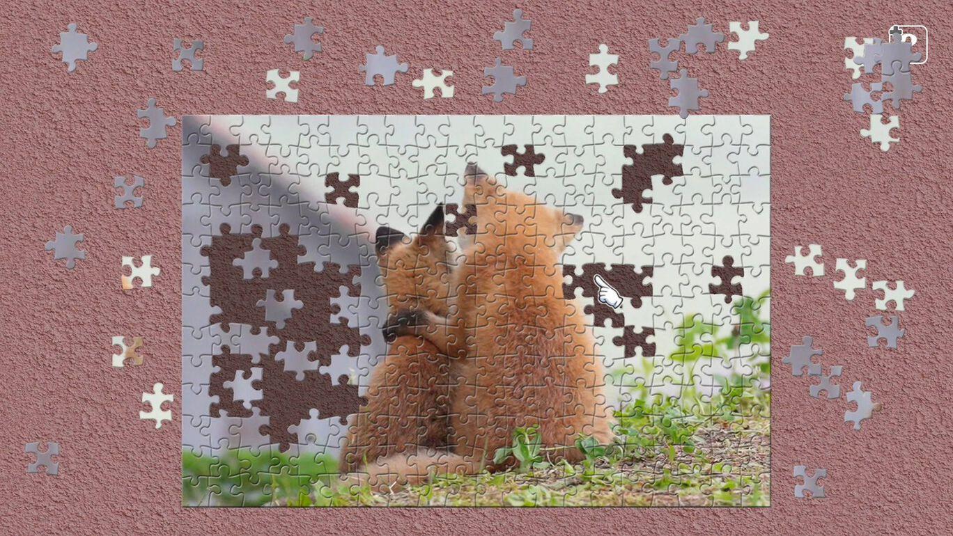 「もふ旅」北海道の野生動物 / 五十嵐健太