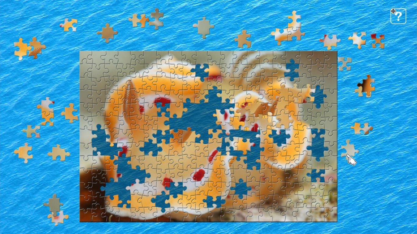 海の宝石 ウミウシ